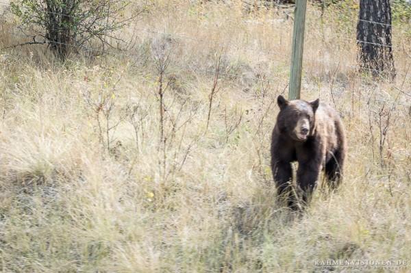 Der erste Bär!