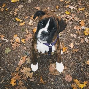 Herbst-Hund