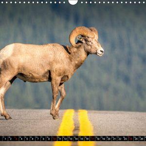Kalender März Kanada - So wild. So schön.